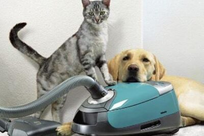 Best Carpet Cleaners For Pets Reviews 2021