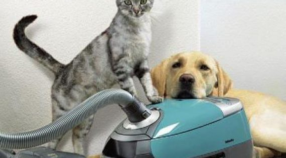 Best Carpet Cleaners For Pets Reviews 2019