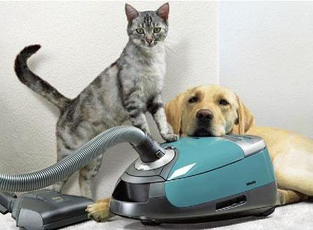 Best Carpet Cleaners For Pets Reviews 2017